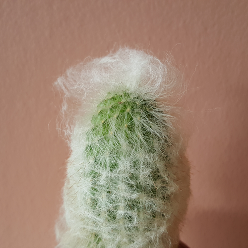 old man cactus plant sale GTA