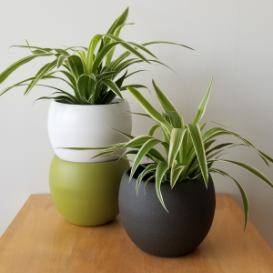 decorative ceramic container for indoor plants houseplants interiorplants online sale Toronto Etobicoke Mississauga Brampton Burlington Oakville Hamilton North York Richmond Hill GTA