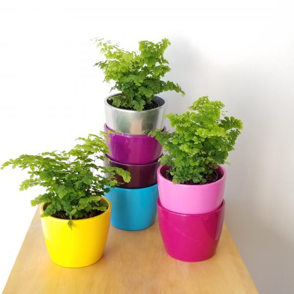 Decorative ceramic containers assorted colors for indoor plants houseplants interiorplants online sale GTA delivery curbside pickup Mississauga Toronto Etobicoke Oakville Burlington Brampton Oakville