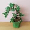 bonsai juniper 3 inch pot flowering indoor plants houseplants plant sale Mississauga Toronto Brampton Oakville Burlington Etobicoke GTA