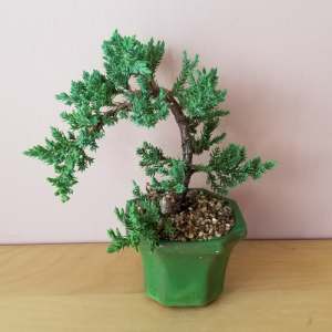 bonsai juniper 3 inch pot flowering indoor plants houseplants plant sale Mississauga Toronto Brampton Oakville Burlington Etobicoke GTA