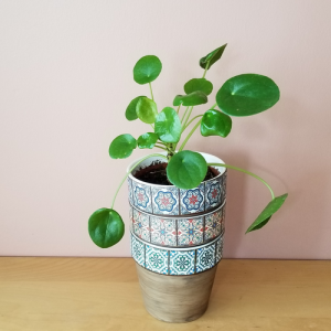 decorative ceramic container 5 inch for indoor plants houseplants sale Mississauga Toronto Brampton Burlington Oakville GTA pilea plant