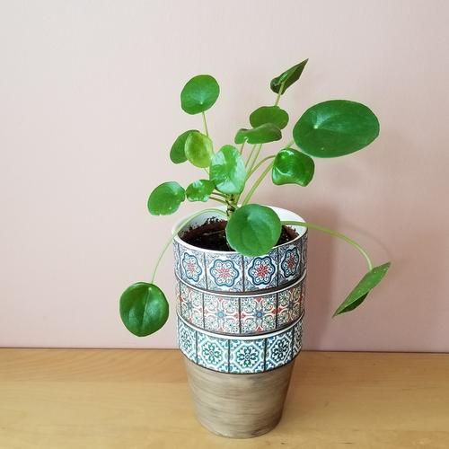 decorative ceramic container 5 inch for indoor plants houseplants sale Mississauga Toronto Brampton Burlington Oakville GTA pilea plant