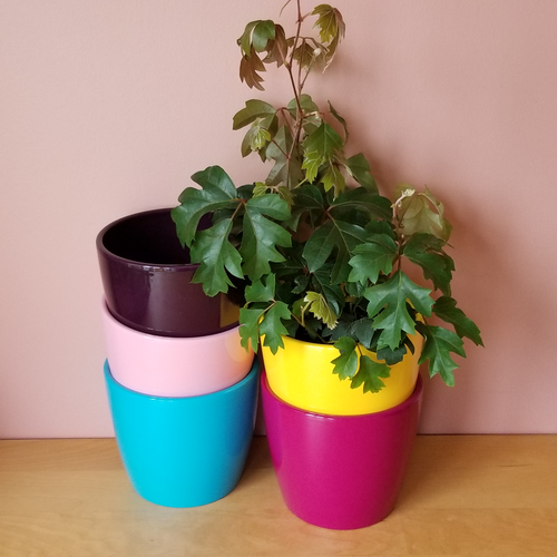 decorative ceramic containers 'Marlow' in variety for indoor plants houseplants sale Mississauga Toronto Brampton Burlington Oakville GTA