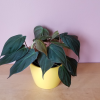 decorative ceramic container 'Marlow' 4 inch for indoor plants houseplants office plants interiorplants plant sale Mississauga Toronto Brampton Oakville Burlington Brampton GTA