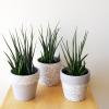 decorative ceramic container for indoor plants houseplants plant sale Toronto Etobicoke Mississauga Brampton Oakville Burlington GTA