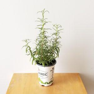 Indoor plants houseplants interior plants GTA Mississauga Etobicoke Brampton Oakville Burlington Organic herbs Rosemary