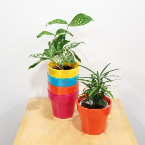 ceramic decorative container 4 inch Malibu assorted colors for indoor plants houseplants interiorplants plant sale Mississauga Toronto Brampton Burlington Oakville Hamilton North York Etobicoke GTA
