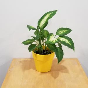 ceramic decorative container 4 inch Malibu assorted colors for indoor plants houseplants interiorplants plant sale Mississauga Toronto Brampton Burlington Oakville Hamilton North York Etobicoke GTA