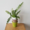 decorative ceramic container for indoor plants houseplants interior plants plant sale Toronto Etobicoke Mississauga Brampton Burlington Oakville Hamilton North York GTA deco containers