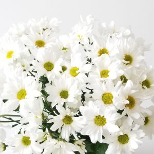 Fresh cut flowers Flower arrangements Flower bouquet Daisies White GTA Mississauga Toronto Etobicoke Brampton Oakville Burlington Hamilton Richmond Hill Milton Flower gifts for all occasions