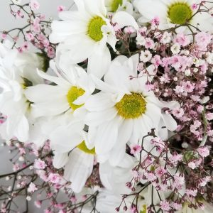 Fresh cut flowers Flower arrangements Flower bouquet GTA Mississauga Toronto Etobicoke Brampton Oakville Burlington Hamilton Richmond Hill Milton Flower gifts for all occasions Daisies White with pink gypsophila