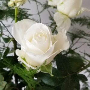 Fresh cut flowers White Roses Premium Flower bouquet Gifts for loved ones GTA Mississauga Etobicoke Toronto Brampton Oakville Burlington Milton Richmond Hill North York fresh cut flowers white roses with greenery