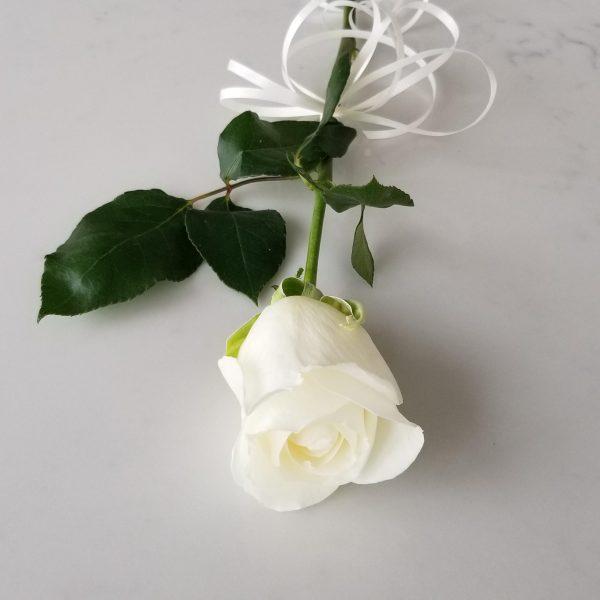 Fresh cut flowers White Roses Premium Flower bouquet Gifts for loved ones GTA Mississauga Etobicoke Toronto Brampton Oakville Burlington Milton Richmond Hill North York