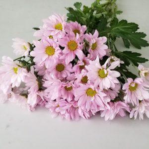 Fresh cut flowers flower bouquet Gifts for loved ones GTA Mississauga Etobicoke Toronto Brampton Oakville Burlington Milton Richmond Hill North York Daisies pink bouquet