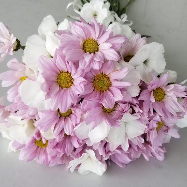 Fresh cut flowers flower bouquet Gifts for loved ones GTA Mississauga Etobicoke Toronto Brampton Oakville Burlington Milton Richmond Hill North York Daisies pink Dianthus white