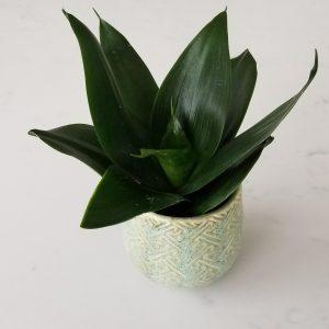 decorative ceramic containers for indoor plants houseplants interior plants plant shop Mississauga Toronto Etobicoke Brampton Oakville Burlington GTA