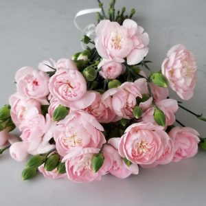 Fresh cut flowers flower bouquet Gifts for loved ones GTA Mississauga Etobicoke Toronto Brampton Oakville Burlington Milton Richmond Hill North York Carnations Delicate Pink