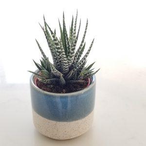 decorative ceramic containers for indoor plants houseplants interior plants plant shop Mississauga Toronto Etobicoke Brampton Oakville Burlington GTA plant gift