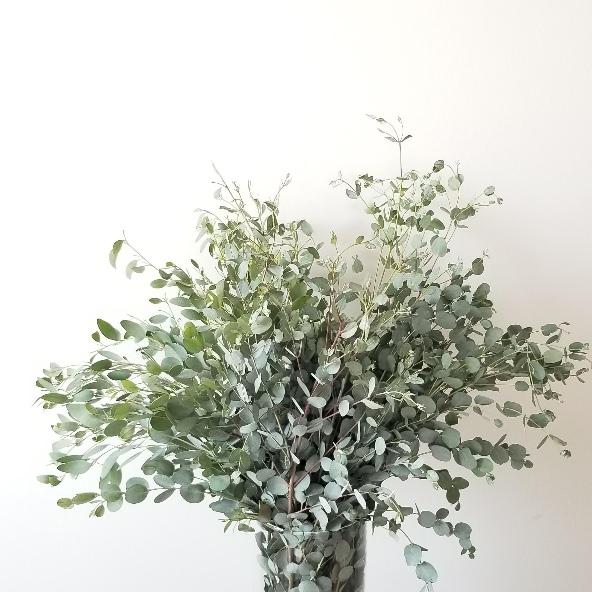 Fresh cut greenery sale bouquet gifts GTA Toronto Etobicoke Mississauga Brampton Oakville Burlington Hamilton Grimsby Eucalyptus Gunni